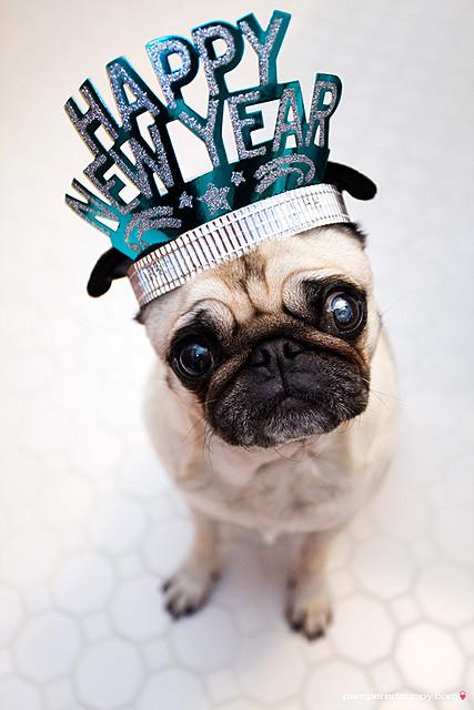 new-years-pug
